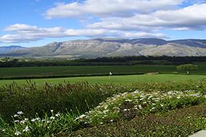Cape Town 2011 244