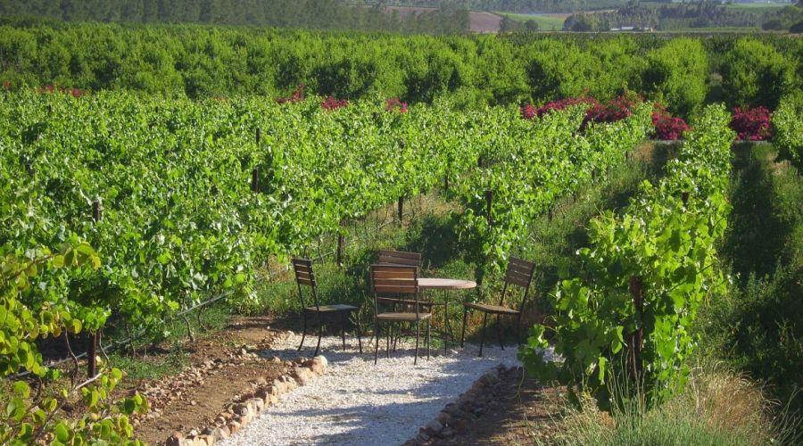 4disa travel wijn proeven in cape town zuid afrika