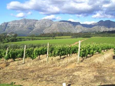 4Disa Travel Condetta Wijn Route Cape Town