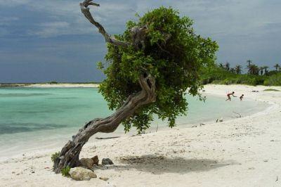 selectair 4disa travel aruba curaçao
