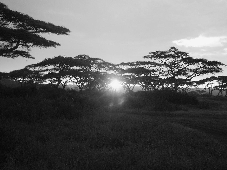 4Disa Travel Condetta Safari Tanzania