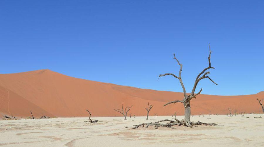 Selectair 4Disa Travel Blog Namibië Namibie